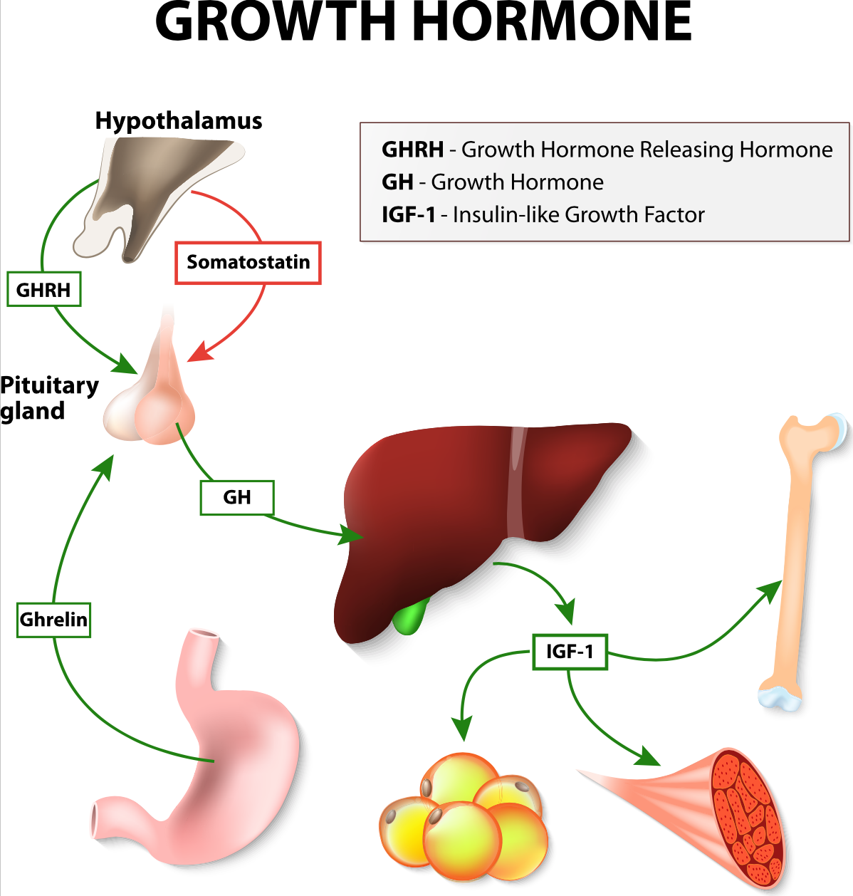 HGH Clinic   HGH Therapy   HGH Doctor   HGH for Men   HGH